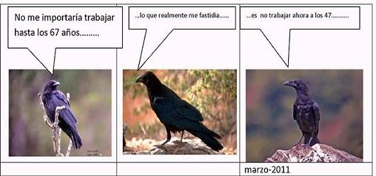 20110301193256-el-cuervo-2.jpg