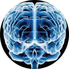 20110406170810-cerebro.jpg
