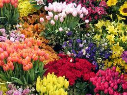 20120304194802-tulipanes.jpg