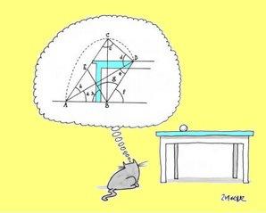 Gato haciendo cálculos